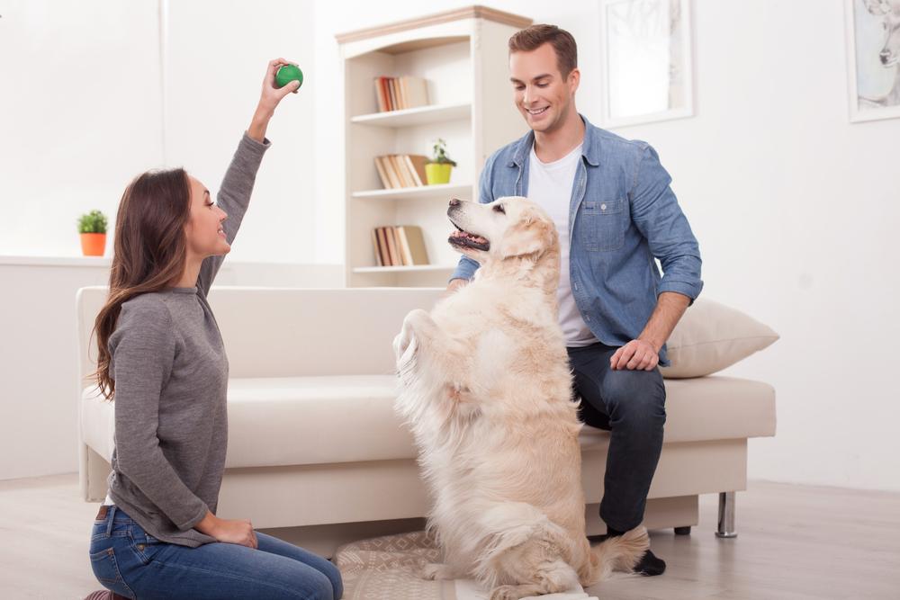 Cachorro em apartamento: quais as melhores raças?