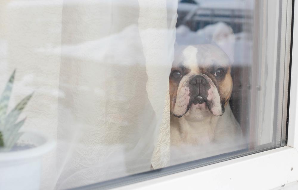 6 dicas pro seu cachorro não sofrer quando estiver sozinho em casa